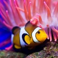 海洋魚ライブ壁紙 - 水族館 on 9Apps