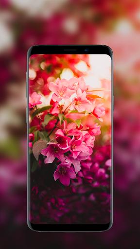 🌺 Flower Wallpapers - Colorful Flowers in HD & 4K 11 تصوير الشاشة