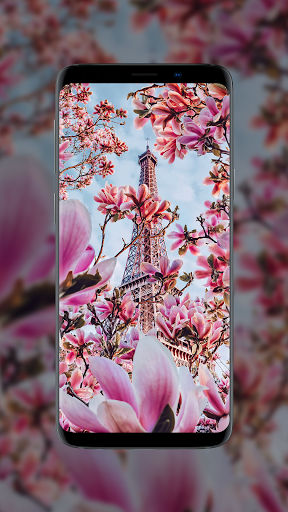 🌺 Flower Wallpapers - Colorful Flowers in HD & 4K 8 تصوير الشاشة