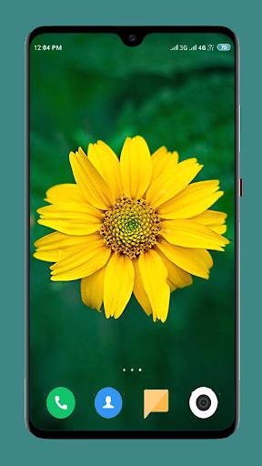 Flowers Wallpaper 4K 11 تصوير الشاشة