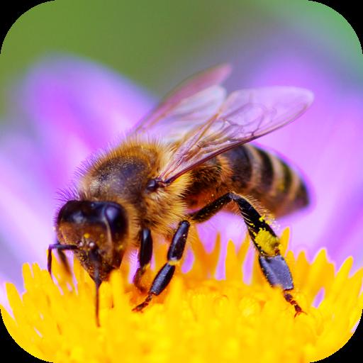 ikon Bee Sounds