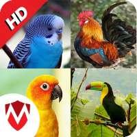 أصوات الطيور 100: نغمات وخلفيات on 9Apps