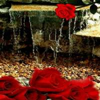 Rose Waterfall Live Wallpaper on 9Apps