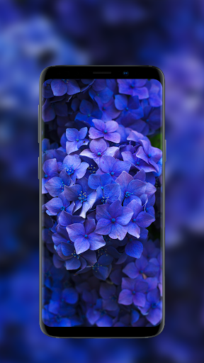 🌺 Flower Wallpapers - Colorful Flowers in HD & 4K 10 تصوير الشاشة