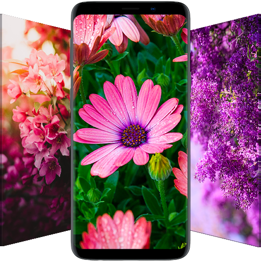 🌺 Flower Wallpapers - Colorful Flowers in HD & 4K أيقونة