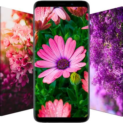 🌺 Flower Wallpapers - Colorful Flowers in HD & 4K