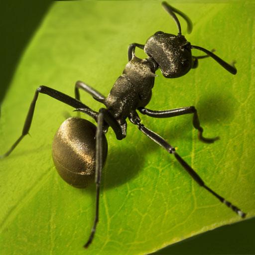 The Ants: Underground Kingdom icon