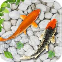 মাছ জীবিত ওয়ালপেপার  অ্যাকোয়ারিয়ামkoi পটভূমি on 9Apps