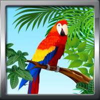 Bird Ringtones Prank on 9Apps