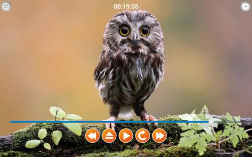 Birds Calls Sounds screenshot 5