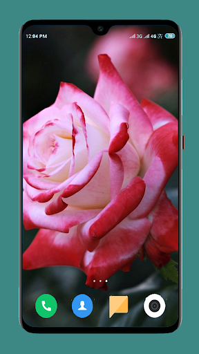 Flowers Wallpaper 4K 9 تصوير الشاشة