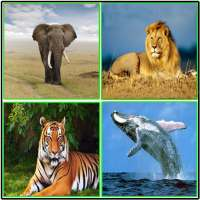 Animal Sounds on 9Apps