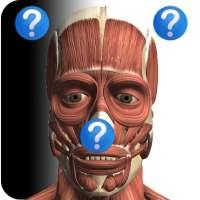 Anatomy Quiz Free on 9Apps