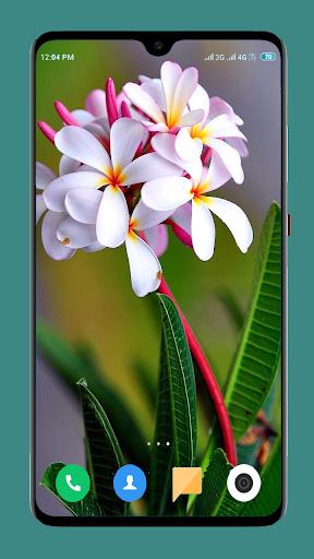 Flowers Wallpaper 4K 7 تصوير الشاشة