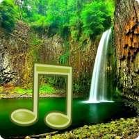 Jungle Sounds - Nature Sounds on APKTom
