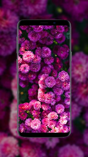 🌺 Flower Wallpapers - Colorful Flowers in HD & 4K 2 تصوير الشاشة