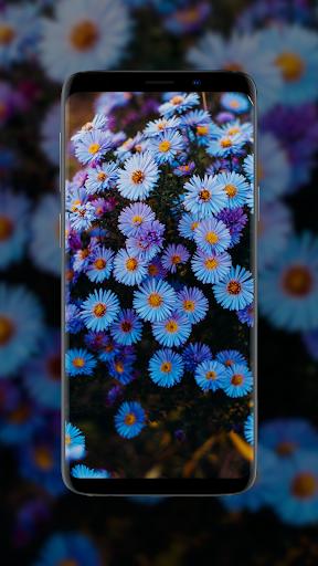 🌺 Flower Wallpapers - Colorful Flowers in HD & 4K 4 تصوير الشاشة