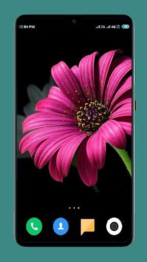 Flowers Wallpaper 4K 4 تصوير الشاشة